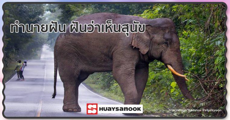 ทำนายฝัน ฝันเห็นช้าง