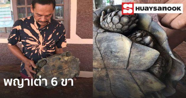 ฮือฮาชาวกระบี่พบ พญาเต่าประหลาด มี6ขา